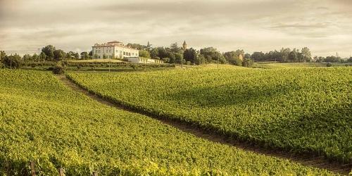 Bologna Wine Tour